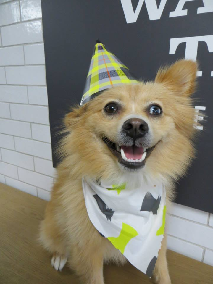 Tony wagging tails pet resort for A wagging tail pet salon