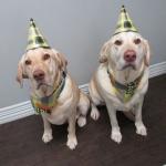 Koda and Bailey