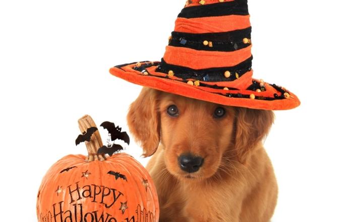 It's a Halloween SPOOKtacular!