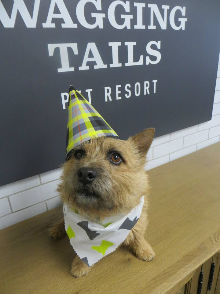 It s your party wagging tails pet resort for A wagging tail pet salon