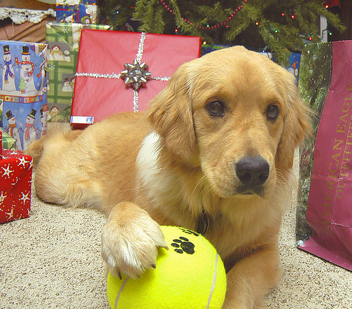 Doggie Gift Guide