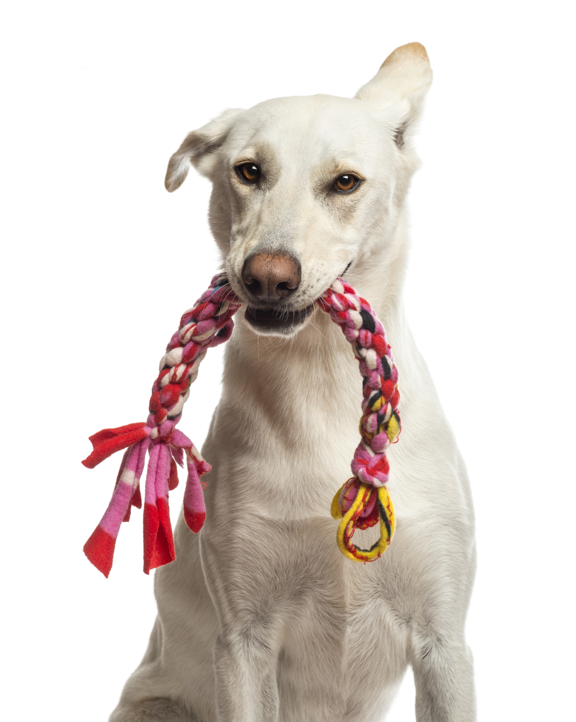 Toys For Dogs : Dog toys wagging tails pet resort