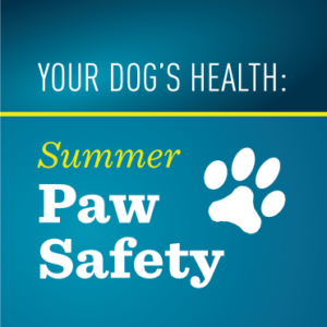 Your Dog's Health: Summer Paw Safety