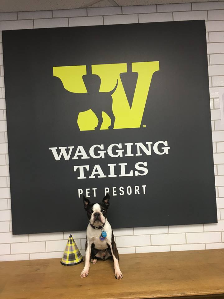 Franklin wagging tails pet resort for A wagging tail pet salon