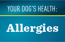 Your Dog's Health