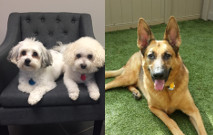 December Tail Waggers of the Month