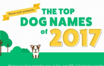 How Did You Name Your Dog?