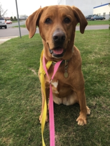 Luna Tail Wagger of the Month May