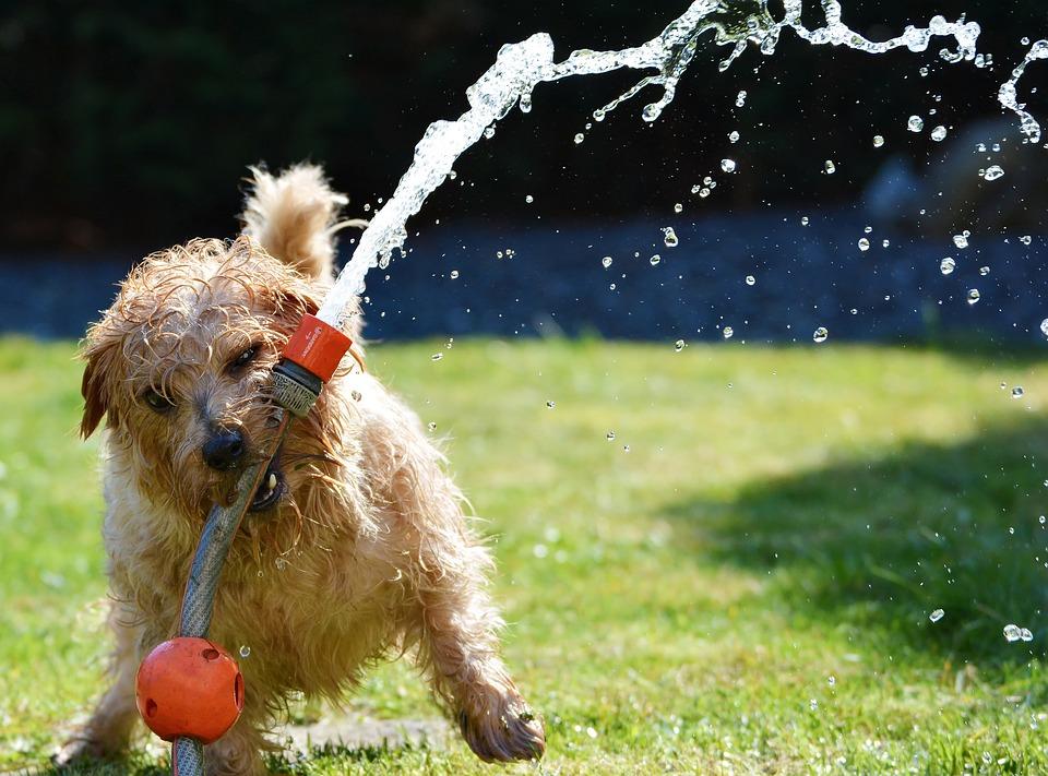 dog with hose