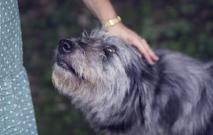 Part One: Adopting a Dog
