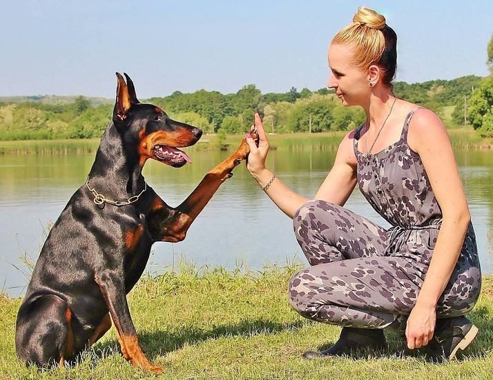 woman and dog high-five