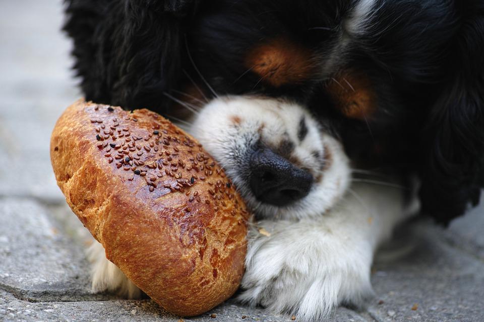 dog with bun
