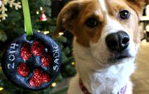 DIY Dog Ornaments