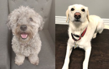 Tail Waggers of the Month