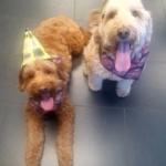 Riley and Stella