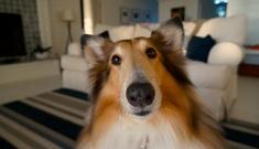 Providing Enrichment for Dogs in Winter