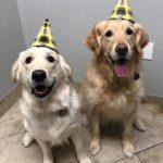 Jasper & Abbey