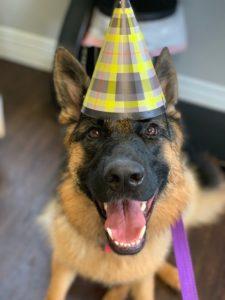 dog wearing birthday hat