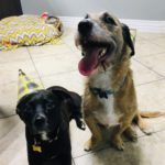 dogs wearing birthday hats