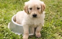 Your Dog's Health: Heart Disease Alert